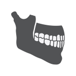 A drawn icon of a skeletal upper and lower jaw, clenching and showing its full set of teeth